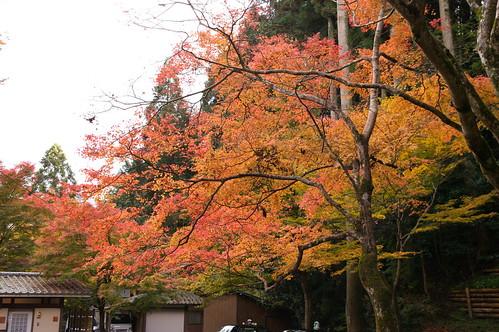 【写真】2012 紅葉 : 寂光院/2020-08-29/IMGP6322