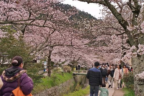 【写真】2013 桜 : 哲学の道/2018-12-24/IMGP9238