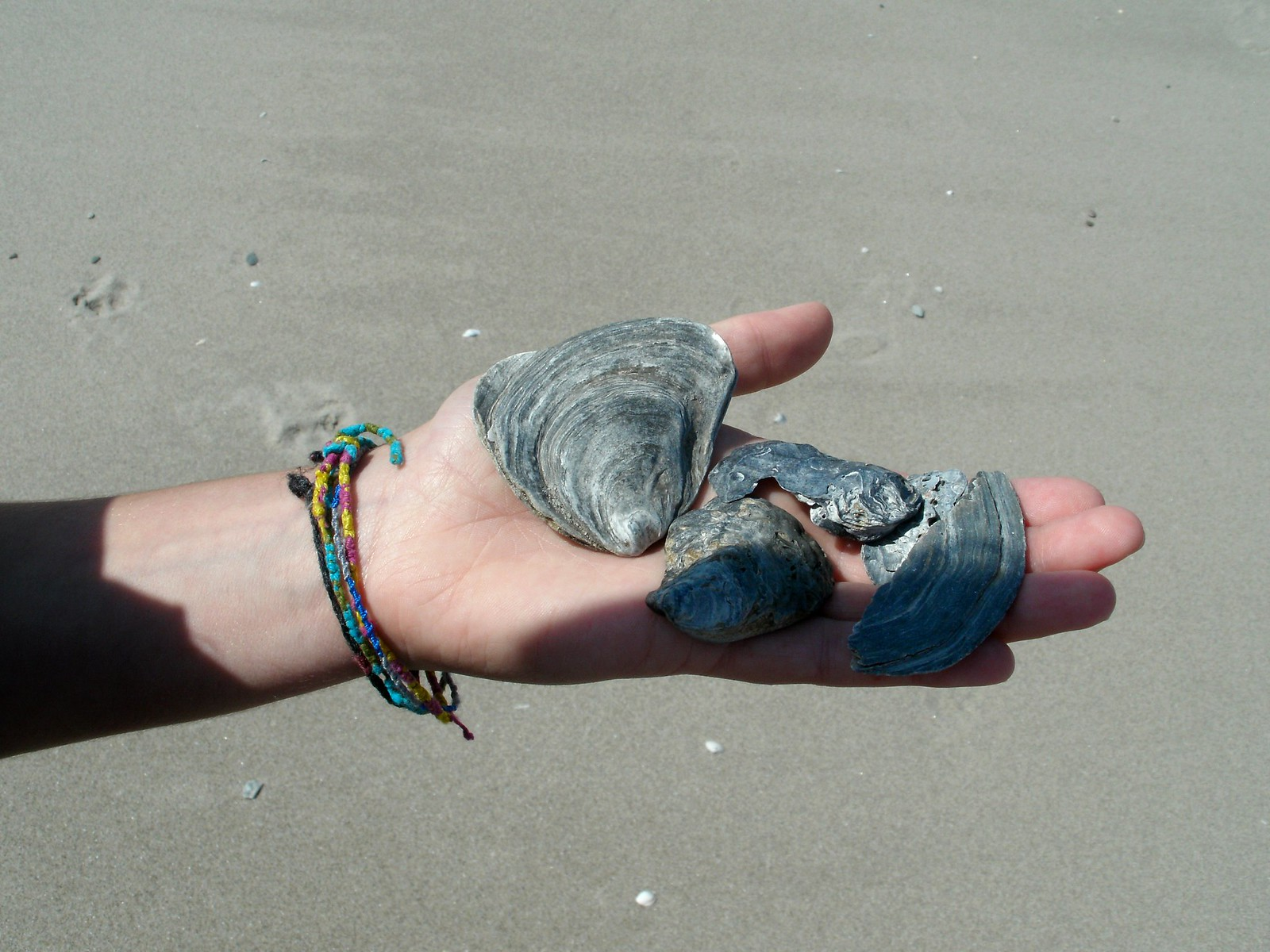 A girl showcases a few shells on her hand.