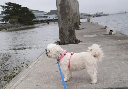 Dory on Dock