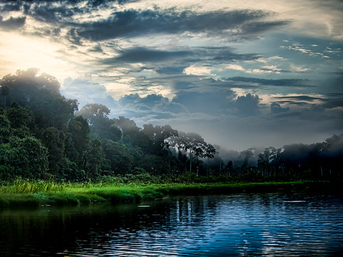 peru field amazon rainforest science abs tamu biodiversity tambopata madrededios 2013