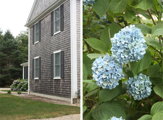 house & hydrangea