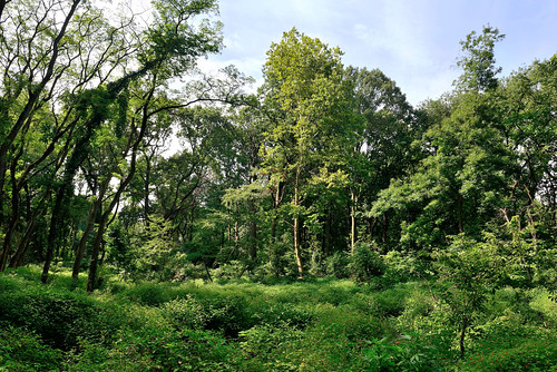Van Cortlandt Park - Forest Meadow