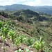 Countryside of Chiapas - Campo de Chaipas entre San Pedro Pohlo y Yabeteclum, Distrito Pantelhó, Chiapas, Mexico por Lon&Queta