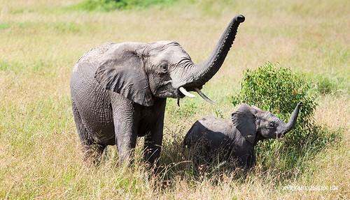 Kenia - Masai Mara 68