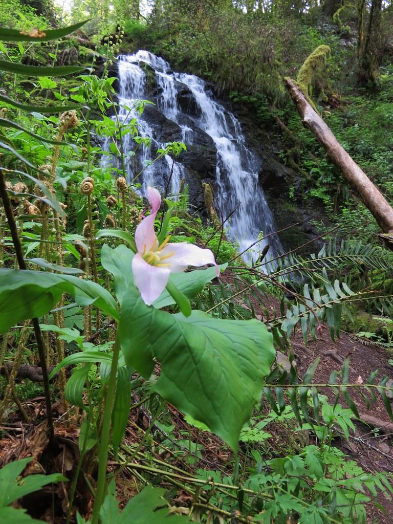 Trillium at Woodburn Falls