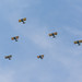 Arsenal of Democracy Flyover 6.jpg by JasonianPhotography