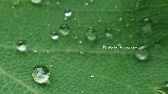 雨の日はカメラを持っていくとかわいい滴が撮れます♪