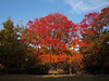 Photo:Autumn leaves of Tokorozawa Kouku-kinen-kouen | 所沢航空記念公園の紅葉 By over_frost
