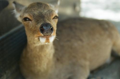 hey, bambi.