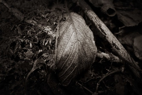 woods by Nature Morte