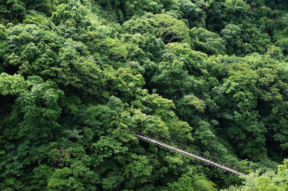 巨木群,與往拉拉山的路上-009