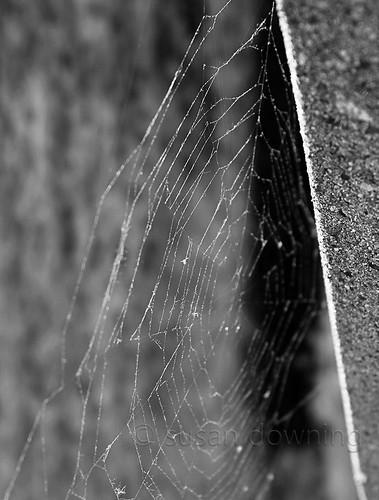 Web BW {19/52}