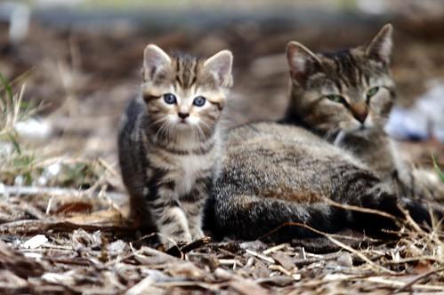 mama & baby kitten