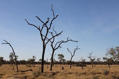 IMG 9978 Uluru Dreaming 2012