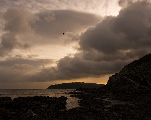 sea rock clouds real bay gull pools nz wellington tasman titahi