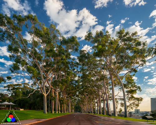 Good morning Kings Park! by Douglas Remington - Ethereal Light® Photography