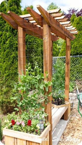 June 2013 Garden Update7