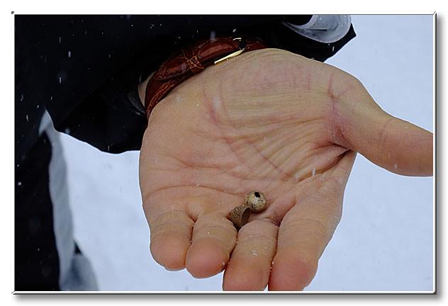 コナラの実.ミズナラの実と比べてみるとその名の通り実が小さい.