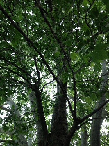 163_2013_under_j12 by teach.eagle