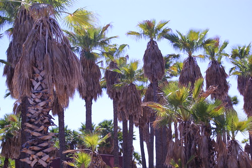 Coolidge Palms by Digital Heather