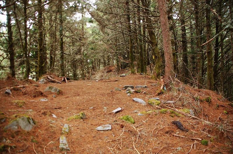 新仙山北稜松針營地