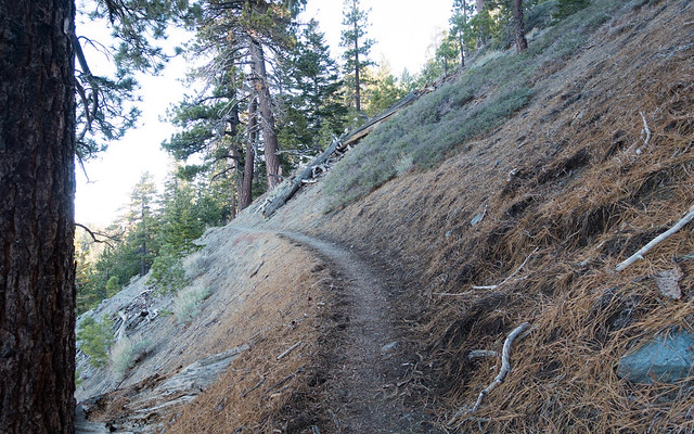 Trail at mile 363