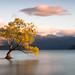 That Wanaka Tree by Helder Ribeiro