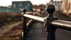 Windy Fence