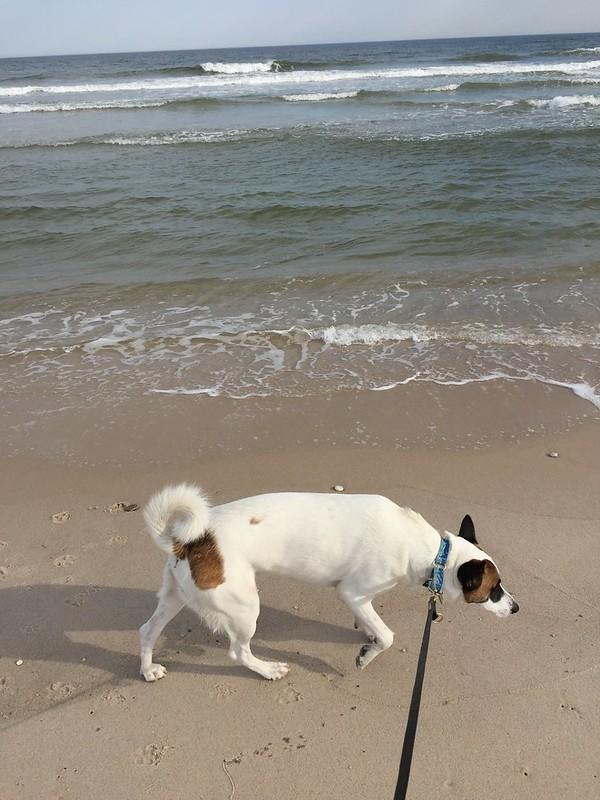 Rocket's First Beach Walk