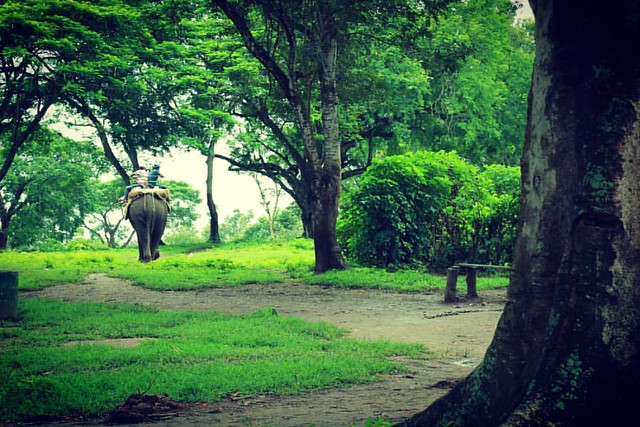 Elephant Ride!!! #karthikclickography #nature #naturep #Wildlife #wildlifephotography #greennature