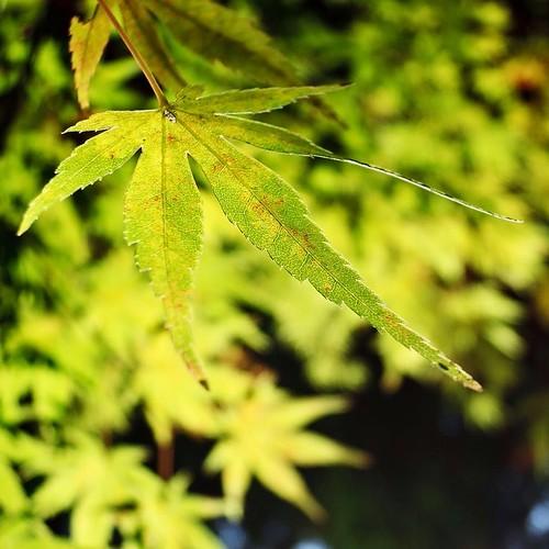 紅葉の葉脈まで撮れるのは良いね。