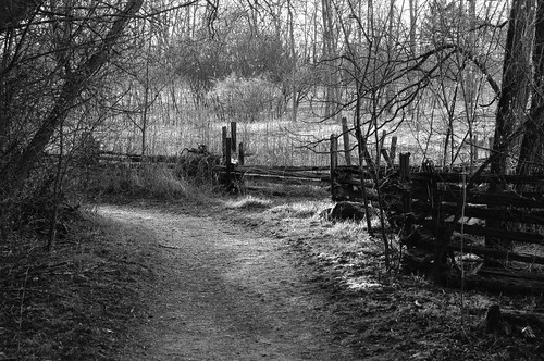 Sunlit Lane by Alan Norsworthy