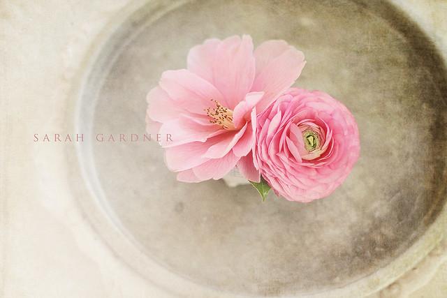 Pink_textured