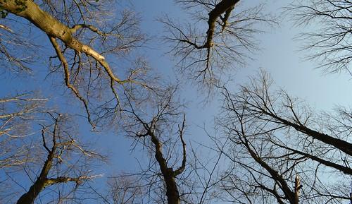 Trees by Malika Ladak