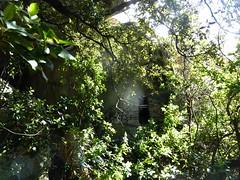 Visite de Sapara Altagna : l'oriu vu de loin