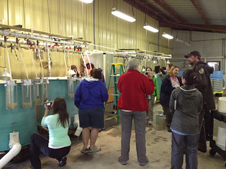 hatchery tour