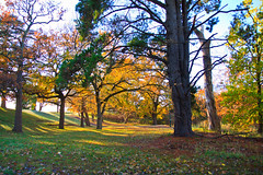 Riddells Creek - Walter J. Smith Reserve