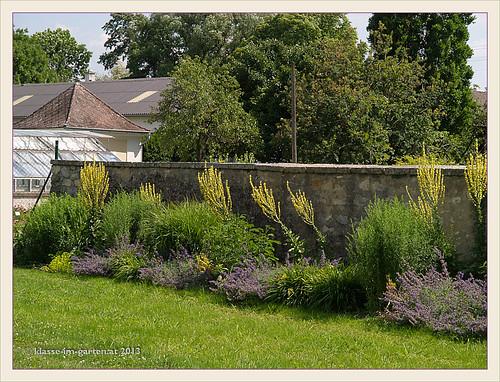 Sichtungsgarten Koenigshof- aussenmauer mit wildpflanzenbeet | 2011-07, 2012-08