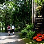 Khao Sok Ausflüge zum Nationalpark mit Übernachtung