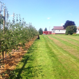 Orchard at Martin's Fruit Farm
