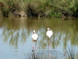 044 flamingo's