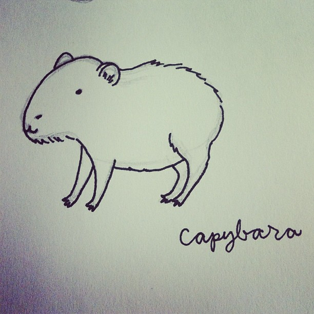 Capybara. #art #draw #drawing #illustration #capybara