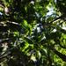 Palms Bush