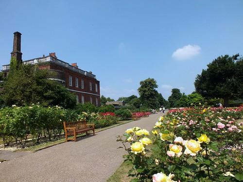 Greenwich Park Rose Garden