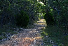 The inhibited greenery of Scott Creek Conservation - Things to do in Adelaide