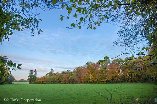 . Autumnal Morning 🍂🍁🍃