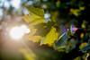 274:365 - 10/16/2016 - Sun Shine