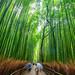 Arashiyama's bamboo grove (Kyoto, Japan) by Alex Stoen
