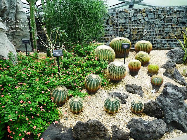 日本東京景點新宿御苑溫室植物 (14)